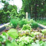 5 Ways To Decrease Yardwork